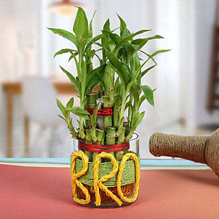 Lucky Bamboo For Brother: Rare Plant Gifts