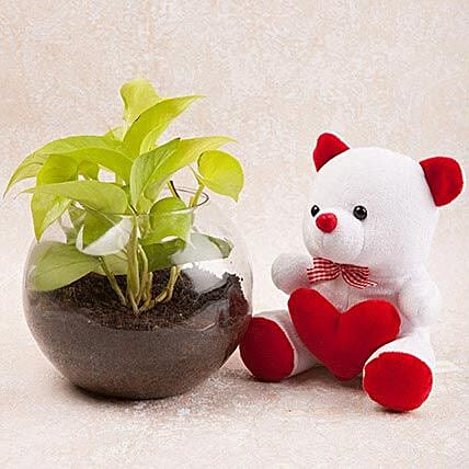 Money Plant Terrarium N Cute Teddy Combo: Daughters Day Plants