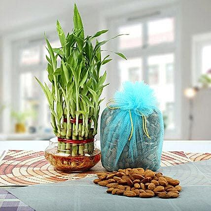 Three Layer Bamboo Plant N Dry Fruits Combo: Send Good Luck Plants