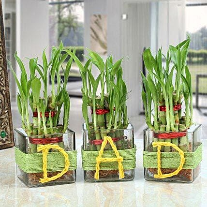 Three Lucky Bamboo Plants For Dad: Plants delivery in Mohali