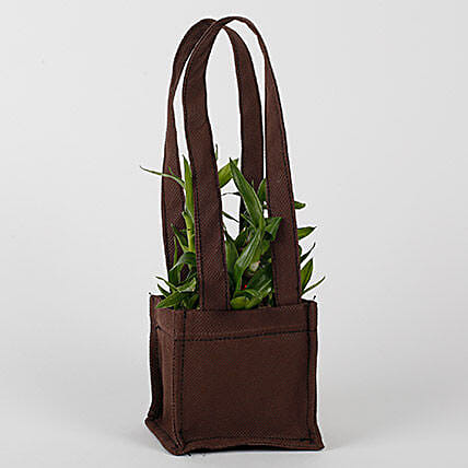 Two Layered Bamboo in Coffee Brown Bag: Send Good Luck Plants