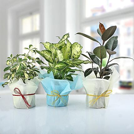 Set of 3 Lush Plants: