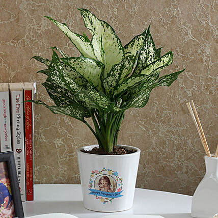 Gorgeous Silver Aglaonema Plant: Personalised Pot plants