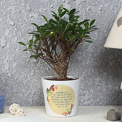 Ficus Bonsai Plant in Printed Pot: Plants for House Warming
