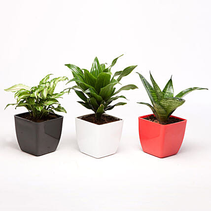 Set of 3 Green Plants in Plastic Pots: