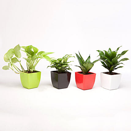 Set of 4 Green Plants in Beautiful Plastic Pots: Bestseller Plants