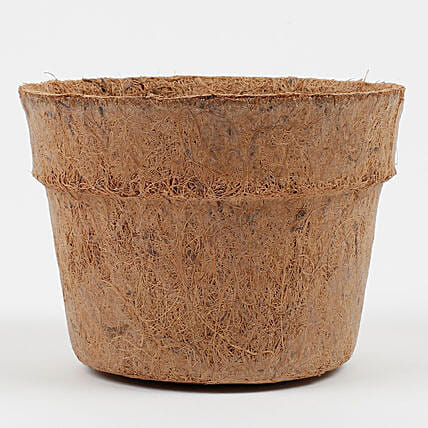 Bio Degradable Coconut Husk Pot Medium: Pots for Plants