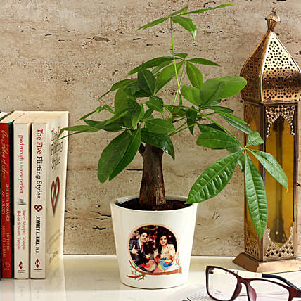 Pachira Bonsai in Personalised Photo Ceramic Pot: Send Good Luck Plants