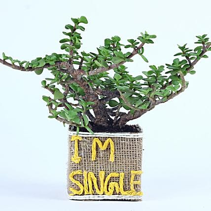 Jade Plant For Singles Day: Singles Day Gifts