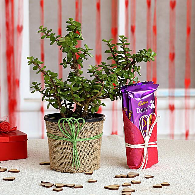 Jade Plant & Dairy Milk Silk Chocolates: Cadbury Chocolates