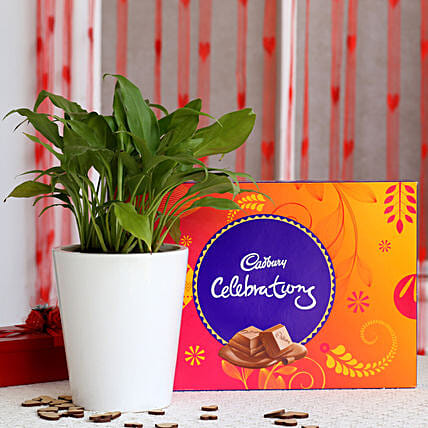 Peace Lily Plant in Ceramic Pot with Cadbury Celebrations: Plant Combo For Valentines Day
