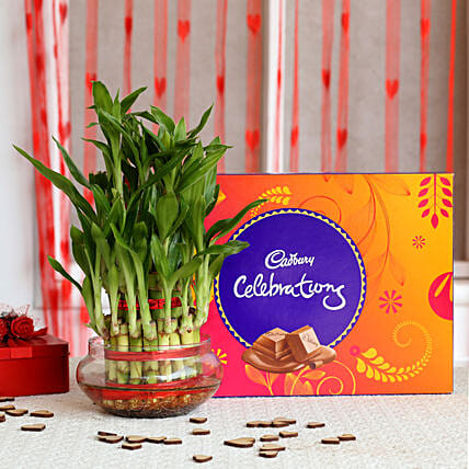 Three Layer Lucky Bamboo with Cadbury Dairy Celebrations: Cadbury Chocolates