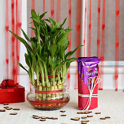 Three Layer Lucky Bamboo with Dairy Milk Silk: Valentine Plants