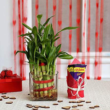 Two Layer Bamboo Plant & Cadbury Dairy Milk Chocolates: Cadbury Chocolates