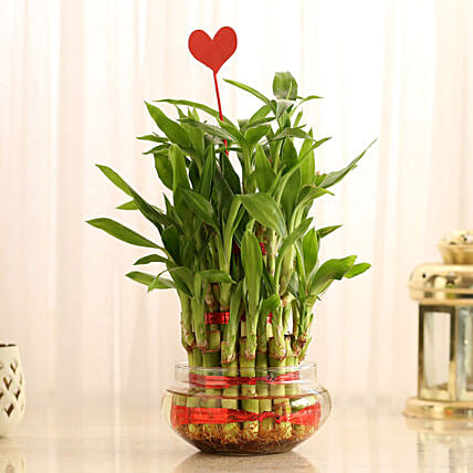 Three Layer Lucky Bamboo With Heart Shaped Tag: Valentine Plants