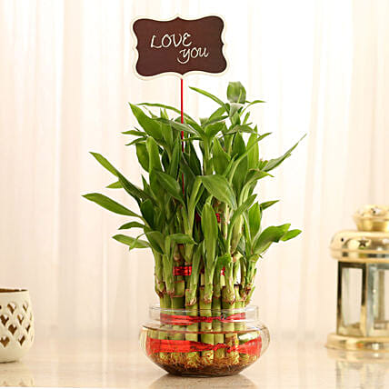 Three Layer Lucky Bamboo With Love You Tag: Lucky Bamboo Plants