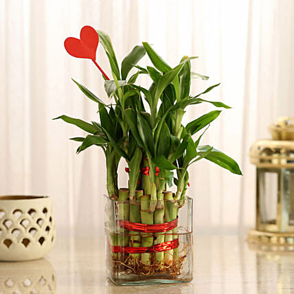 Two Layer Lucky Bamboo With Heart Shaped Tag: Send Plants for Anniversary