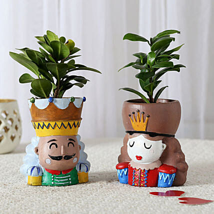 Set of 2 Ficus Compacta In King Queen Pots: Home Decor Gifts Ideas