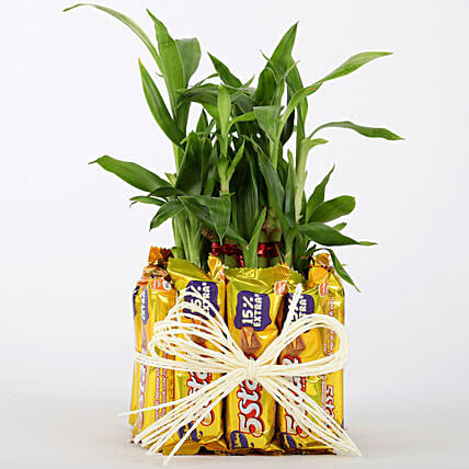 2 Layer Lucky Bamboo With 12 Chocolates: