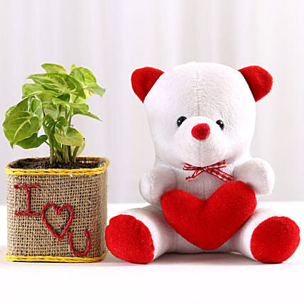 Syngonium Plant in I Love You Vase & Teddy Bear: Gift Combos