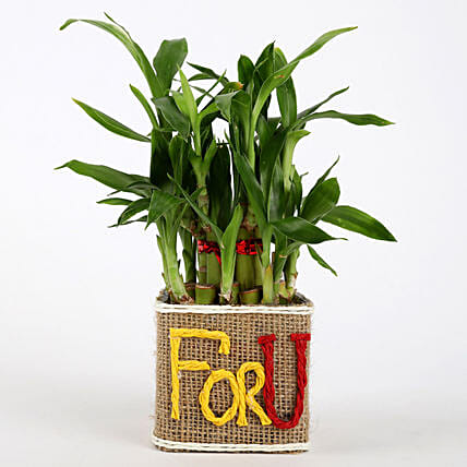 Valentine Special 2 Layer Lucky Bamboo In For U Vase: Lucky Bamboo Plants