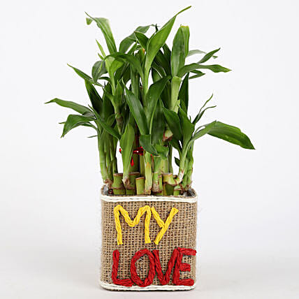 Valentine Special 2 Layer Lucky Bamboo In My Love Vase: Valentines Day Lucky Bamboo