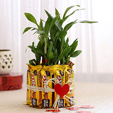 Lucky Bamboo with Five Star Chocolates Combo: