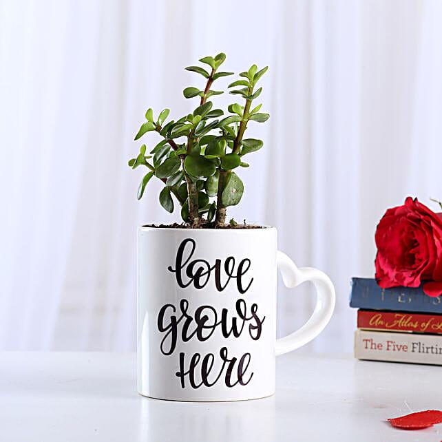 Jade Plant In Love Special Ceramic Mug: Best Outdoor Plant