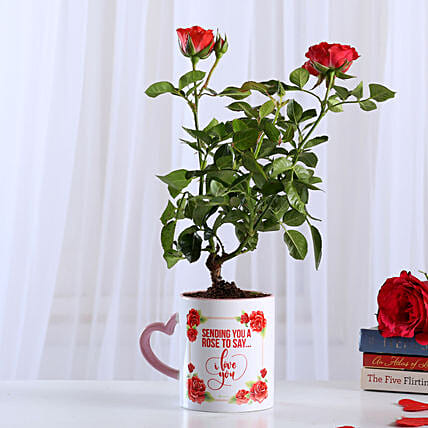 Rose Plant In White Ceramic Mug: Flowering Plants For Valentine's Day