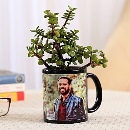 Jade Plant In Stylish Personalised Mug: Succulents and Cactus Plants