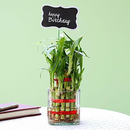 2 Layer Bamboo Plant For Happy Birthday: Plants delivery in Mohali