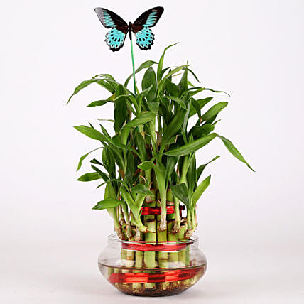 3 Layer Bamboo Plant With Butterfly: