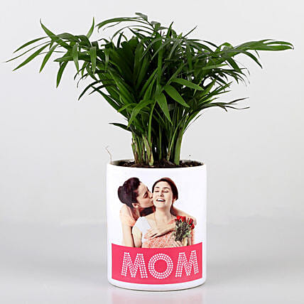 Chamaedorea Plant In Personalised Mom Pot: Mothers Day Personalised Pot-plants