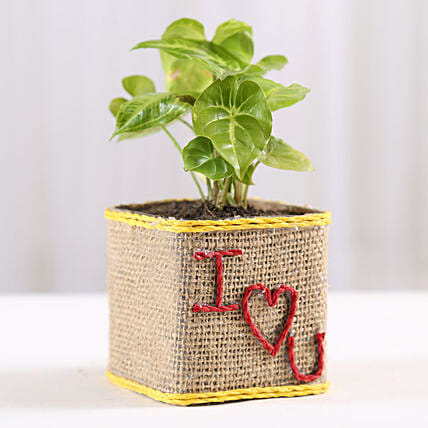 Syngonium Plant in I Love You Vase: Anniversary Gifts for Girlfriend