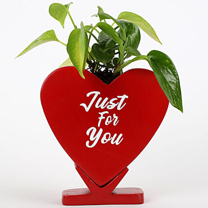 Money Plant In Just For You Ceramic Pot: Money Tree
