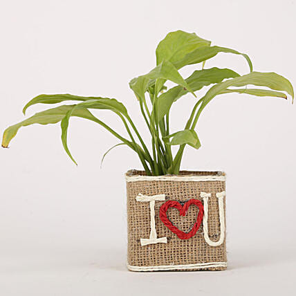 Peace Lily Jute Wrapped I Love You Vase: Money Plant