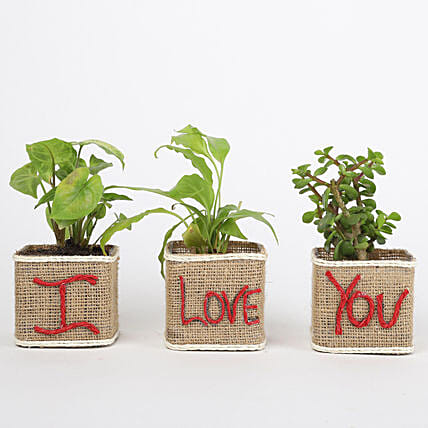 Set of 3 I Love Your Green Plants: Send Plants for Valentines Day