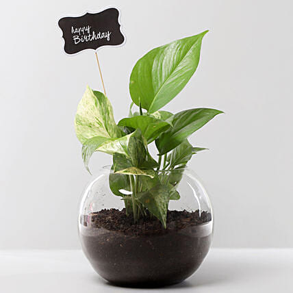 Money Plant Terrarium For Birthday: Send Plants to Mohali