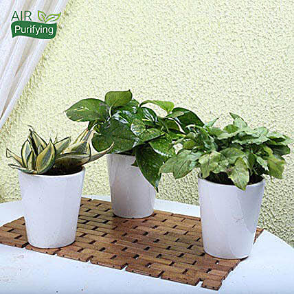 Exotic House Plants: Buy Plants Hyderabad