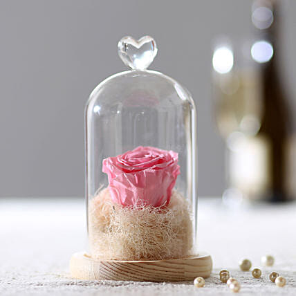 Forever Baby Pink Rose in Glass Dome: Congratulations