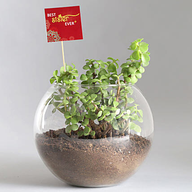 Jade Plant Terrarium with Best Sister Ever Tag: Plants For Raksha Bandhan