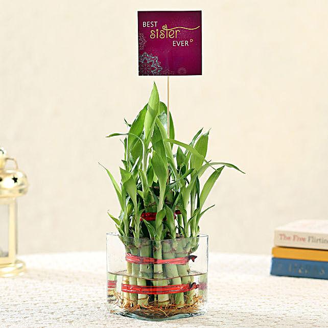 2 Layer Bamboo For Best Sister: Raksha Bandhan Plants