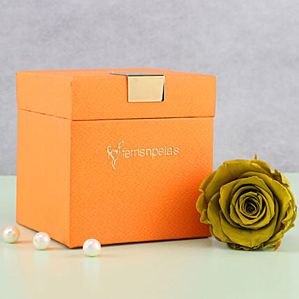 Olive Green Forever Rose in Orange Box: Send Roses