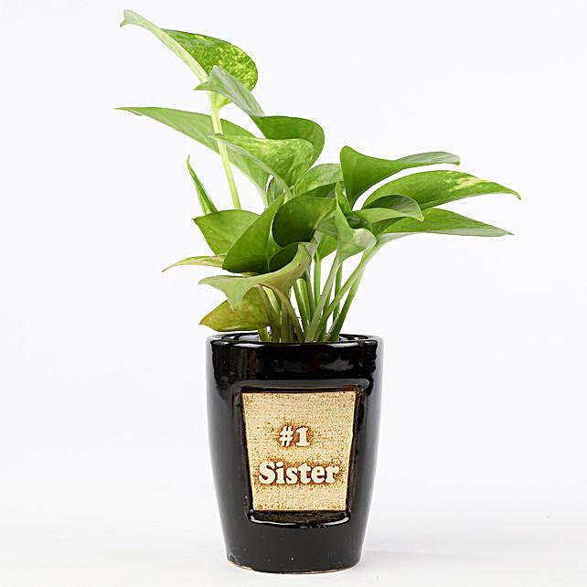 Money Plant In Number One Sister 3D Pot: Raksha Bandhan Plants