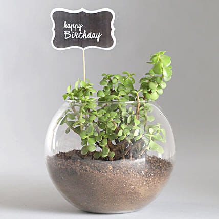 Happy Birthday Jade Plant Terrarium: Send Plants for Birthday