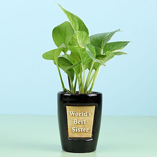 Money Plant For Best Sister: Plants For Raksha Bandhan