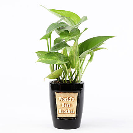 Money Plant In World's Best Brother 3D Pot: Ornamental Plants