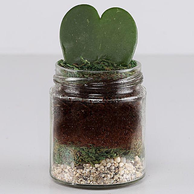 Hoya Plant Jar Terrarium: Send Shrubs
