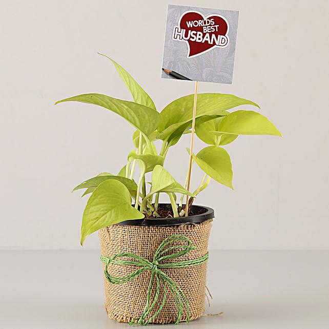 Golden Money Plant For Best Husband: