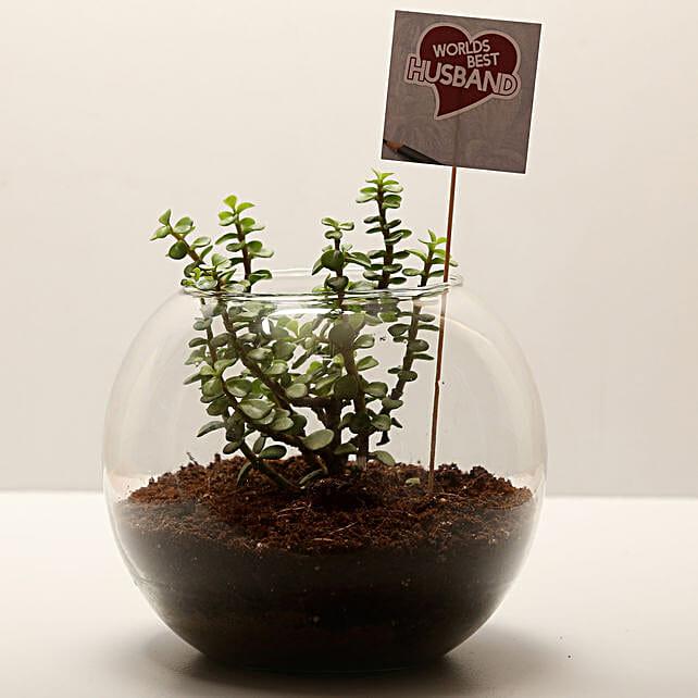 Jade Plant For Best Husband: Plants for Husband